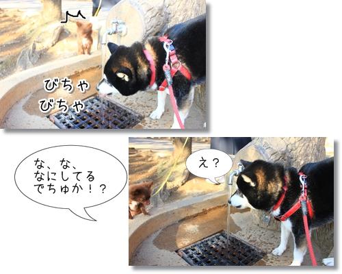 16_20120407025643.jpg