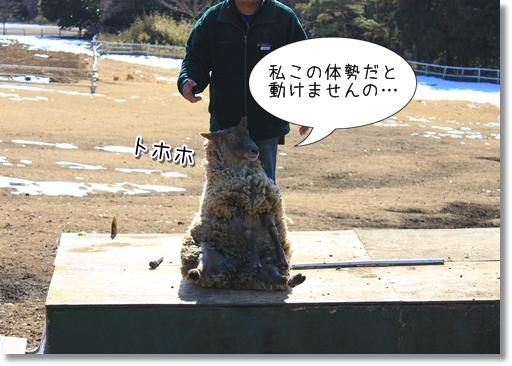 17_20120208025158.jpg