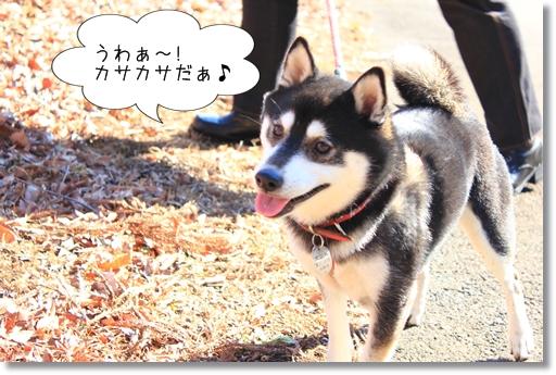 19_20120207040522.jpg