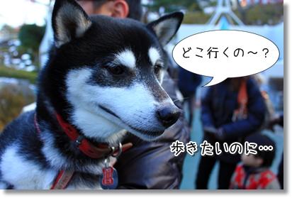 1_20120201024836.jpg