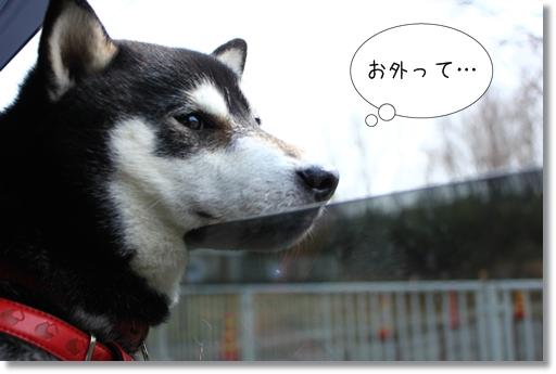 1_20120310011222.jpg