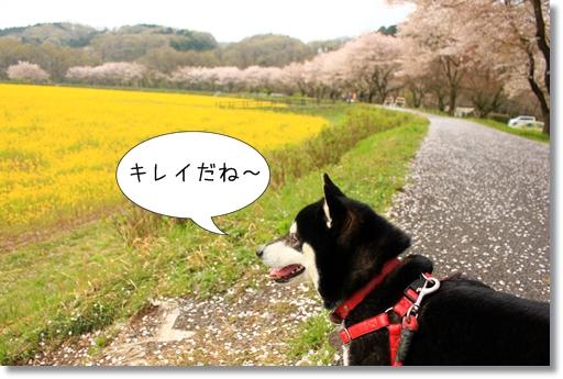 1_20120419013912.jpg