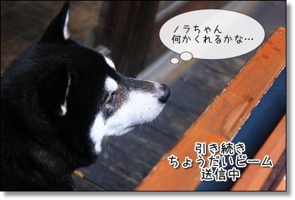 小太郎ちょうだい2