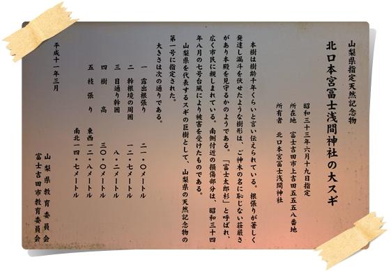 大杉の説明
