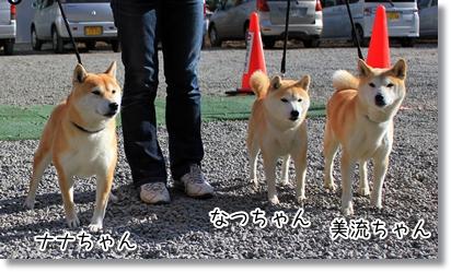 3柴ちゃん