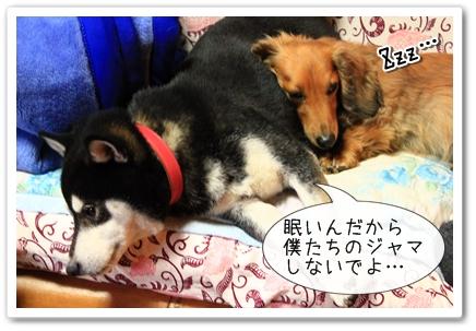 小太郎とペコ2