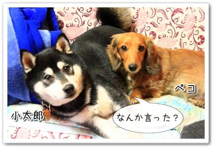 小太郎とペコ