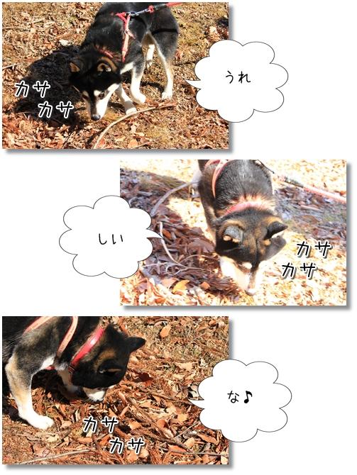 20_20120207040522.jpg