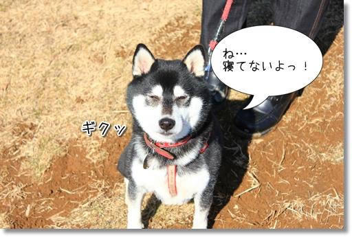 21_20120208031132.jpg