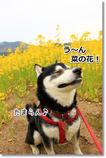 22_20120419025837.jpg