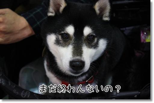 24_20120214164345.jpg
