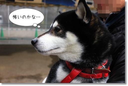 2_20120314030147.jpg