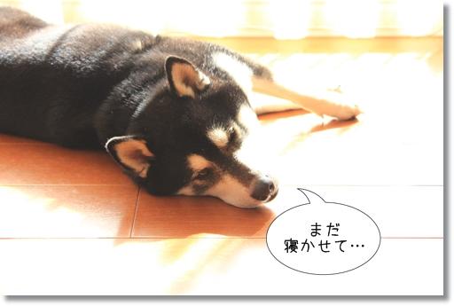 2_20120316023002.jpg