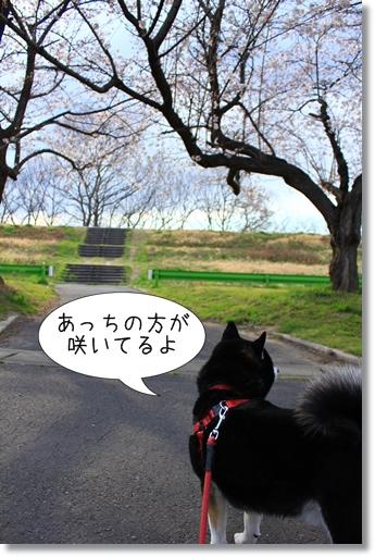 2_20120408040741.jpg