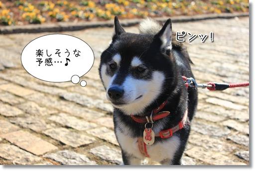 3_20120207031317.jpg
