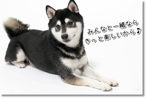3_20120212012241.jpg