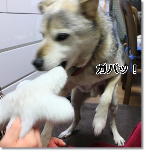 3_20120306034316.jpg