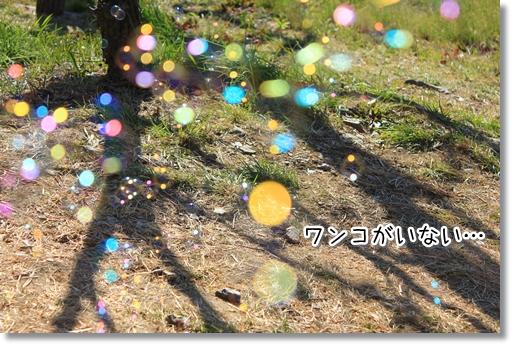 3_20120325011817.jpg