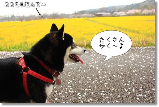 3_20120419013911.jpg