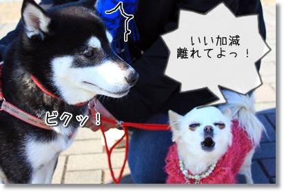 4_20120119005532.jpg