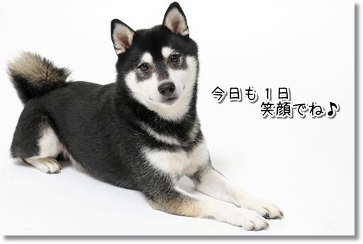 4_20120212012241.jpg