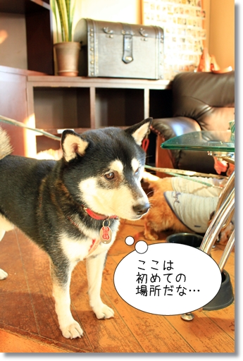 4_20120303213032.jpg