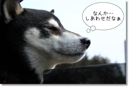 4_20120310011222.jpg