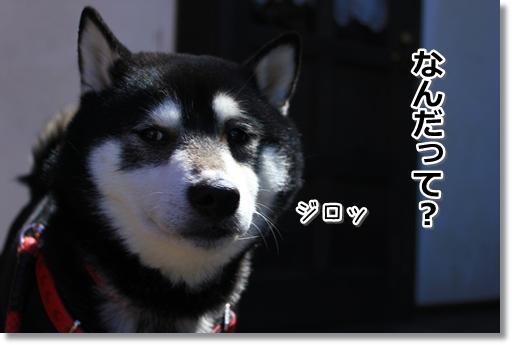 4_20120322013746.jpg