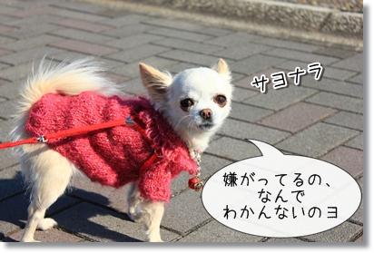 5_20120119005532.jpg