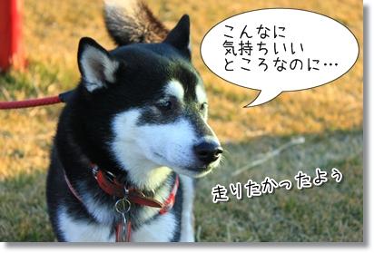 5_20120130163201.jpg