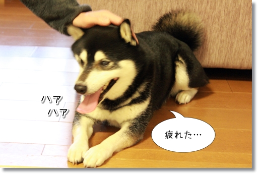 5_20120318175632.jpg