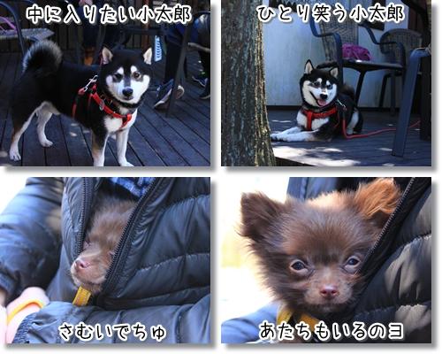 5_20120322013746.jpg