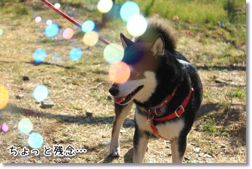 5_20120325011816.jpg