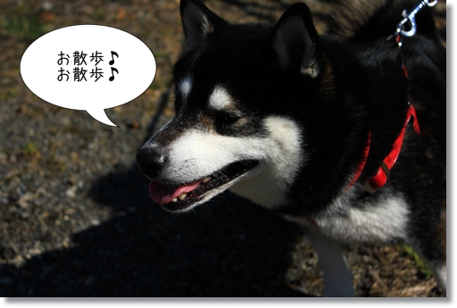 5_20120328012043.jpg