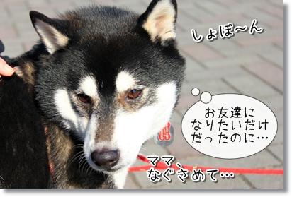 6_20120119005532.jpg