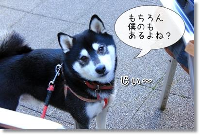 6_20120121022510.jpg