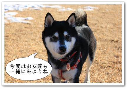 6_20120210013656.jpg