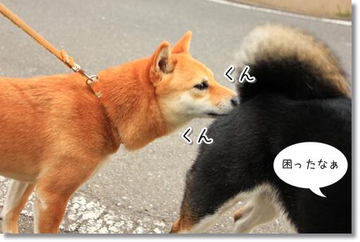6_20120418165200.jpg