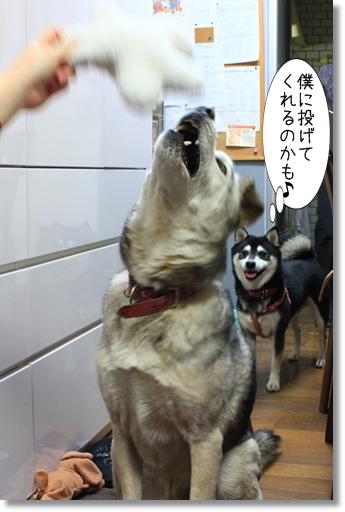 7_20120306035507.jpg