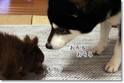 8_20120318182607.jpg
