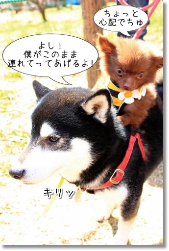 8_20120324015945.jpg