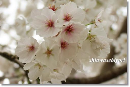 8_20120419015428.jpg