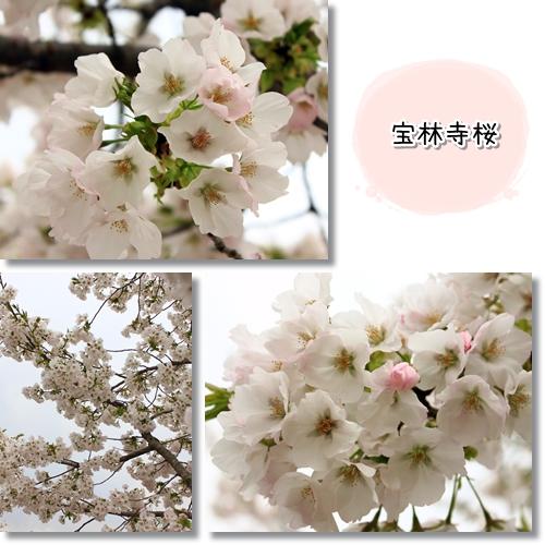 9_20120419015428.jpg