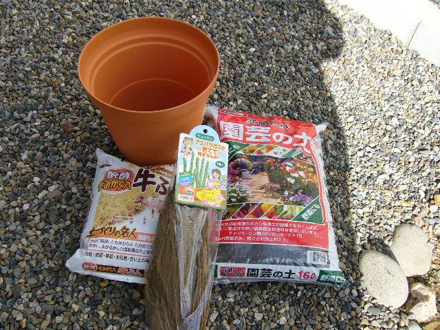 アスパラガス植える1
