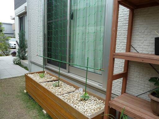 家庭菜園4.JPG