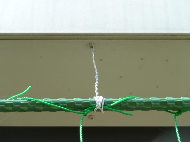 緑のカーテン3.JPG