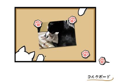 猫コルクボード