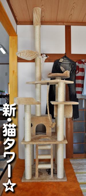 新猫タワー