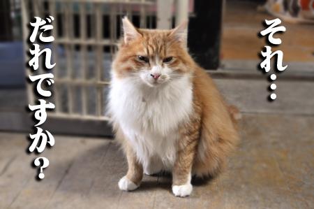 S猫モサモサ2