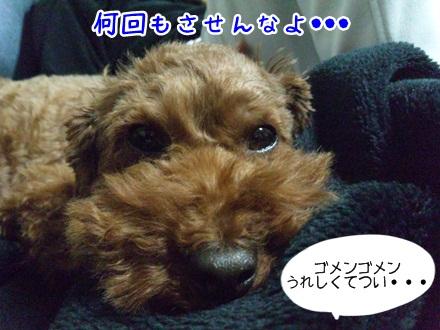 006_20111207223028.jpg